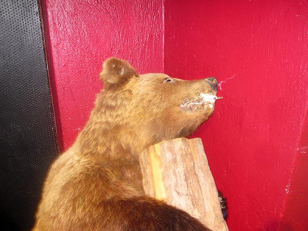 Karhu ja pölkky